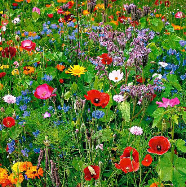 laagblijvende weidebloemen